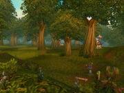 Sted Elwynn Forest
