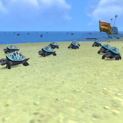 Małe żółwiki