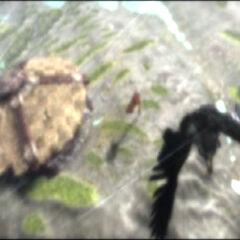Медив улетает с хижины Тралла.