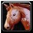 Ability mount ridinghorse