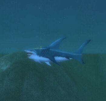 Yellowfin Shark