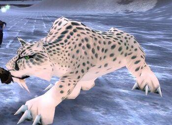 Frost Leopard