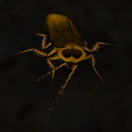 Image of Death's Head Cockroach