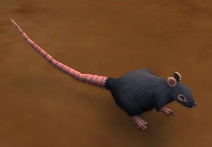 Rat Battle Pet Wowwiki Fandom Powered By Wikia