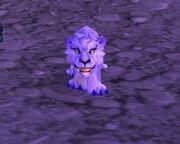 Winterspring cub