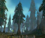 Silverpine Forest day