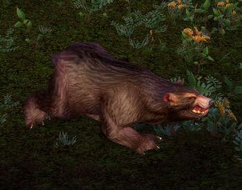 Pacified Hyjal Bear