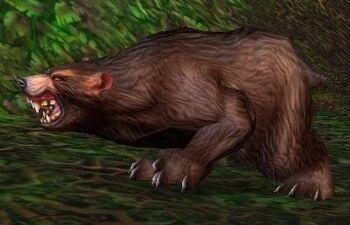 Ashenvale Bear