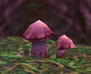 Hyacinth Mushroom