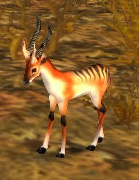 Image of Gazelle Fawn
