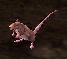 Image of Stowaway Rat