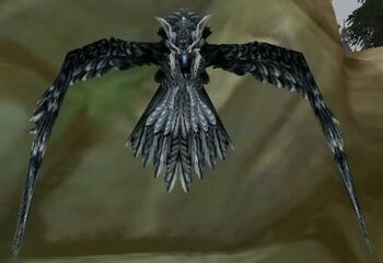 Trained Rock Falcon