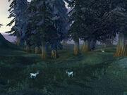 Moongraze Woods
