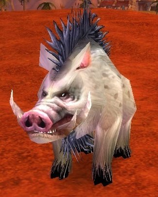 Elder Mottled Boar