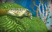 Cataclysm Eel