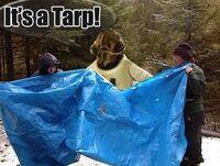 Tarp-30198