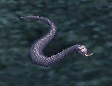 Image of Ash Viper