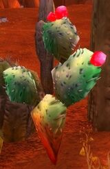 Cactus Apple