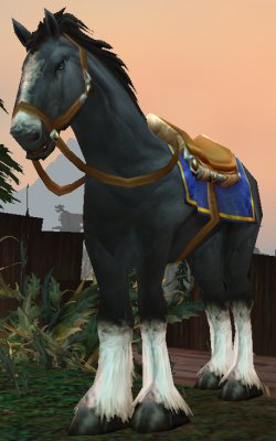 Scout Knowles's Mount