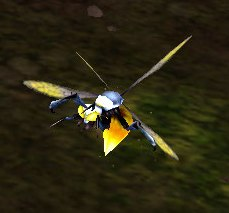Image of Shrine Fly