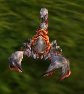 Image of Stripe-Tailed Scorpid