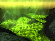 The Scalding Pools