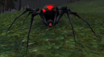 Vicious Night Web Spider