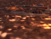 Waterlogged Wreckage