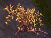 Goldthorn