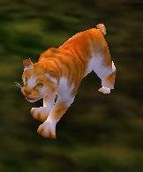 Image of Sand Kitten