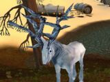 Silvercoat Stag