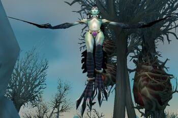 Coldwind Waste Huntress