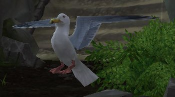 Image of Sea Gull
