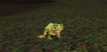 Scalawag Frog