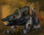 Diseased Black Bear