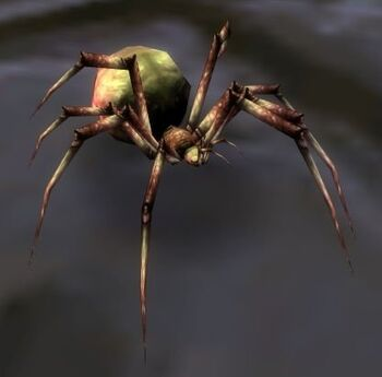 Image of Forest Spiderling