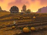 Furlbrow's Pumpkin Farm