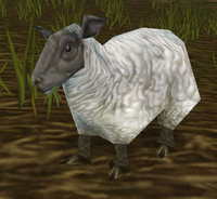 Elwynn Lamb Eating Grass