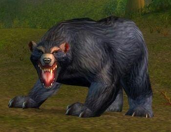 Elder Black Bear