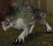 Diseased Wolf