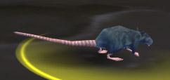 Deeprun Rat