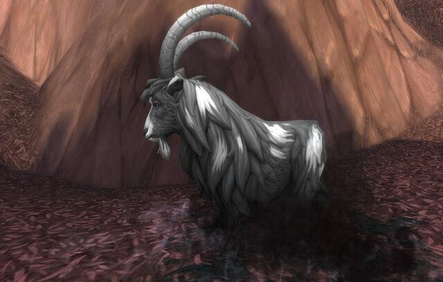 File:Diseased Goat.jpg