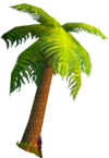 Stranglethorn vale-palm tree
