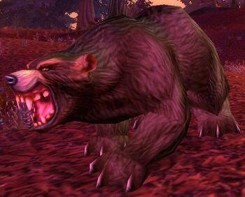 Elder Brown Bear