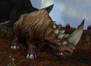 Wooly Rhino Calf