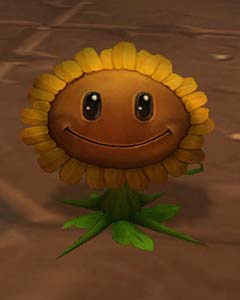 Brazie sunflower