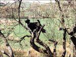 Dog up a tree