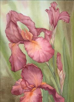 Russet Iris by louise art
