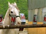 Das Zirkuspferd