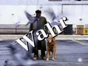 Der Blindenhund (Wahr)